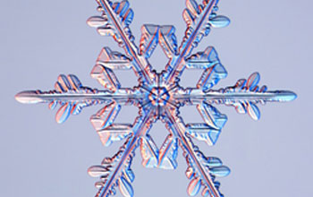 Image of a tree-like branched snow crystal.