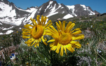 Mountain wildflowers in bloom