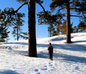 Photo of a researcher walking through the snow-covered forest in Sequoia National Park.