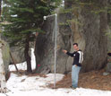 Photo of a researcher standing next to a snow depth sensor in Yosemite National Park.