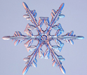 Image of a tree-like snow crystal with branches.