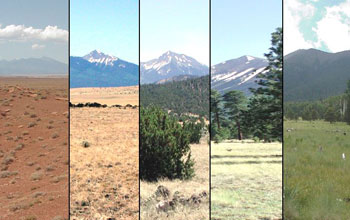 Photos of the studied ecosystems with increasing elevation from left to right.