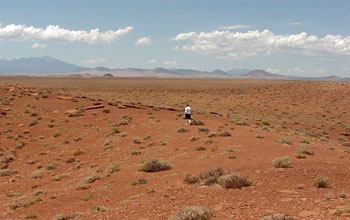 Photo of a person walking in the Great Basin Desert study site.