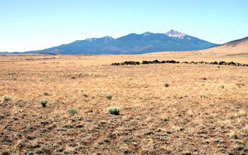 Photo of a desert grassland with mountains in the background.