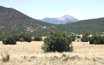 Photo of a pinyon-juniper area with mountains in the background.