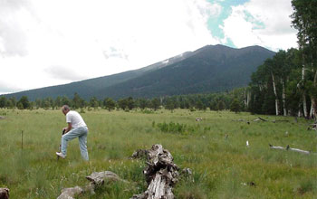 Photo of a mixed conifer meadow with a researcher taking a soil sample.