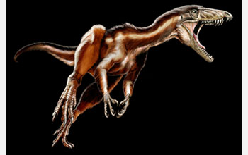 A reconstruction of the newly discovered Triassic, carnivorous dinosaur, Tawa hallae.