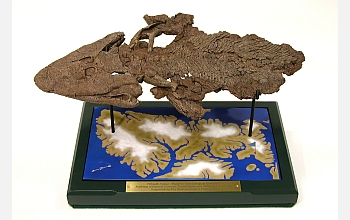 "The ""Tiktaalik"" fossil bridges the evolutionary gap between fish and land animals."