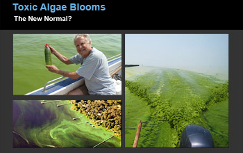 Collage of images showing algae in alakes and researcher