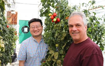 researchers standing with a tomato plant