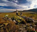 Image of scientists conducting surveys in South Africa to track biodiversity changes.