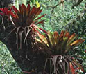 Photo shows epiphytes living on tree branches and trunks.