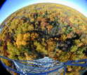 Tree leaves changing color as seen from the eddy-covariance tower.