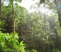 Photo of tropical forest
