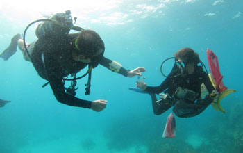 Scientists Dusty Kemp and Meredith Meyers under water in the Florida Keys.