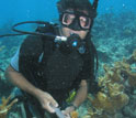 Biologist James Porter samples an elkhorn coral colony for white pox disease.