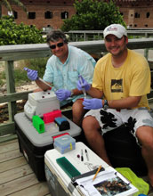 James Porter and Dusty Kemp with a field genetics lab in Dry Tortugas National Park.