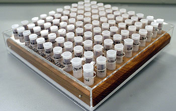 Vials filled with samples are ready for analysis.