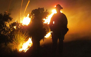 Photo of a firefighter in the foreground and wildfire burning a forest in the background.
