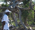 Photo of field assistant Kinyua Warutere watching wild baboons in Amboseli.