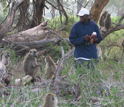 Photo of field assistant Kinyua Warutere with baboons.