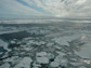 image of Arctic sea ice