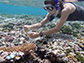 Lupita Ruiz-Jones takes a sample from the corals near Ofu Island