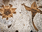two fossilized flowers next to each were discovered in shales of the Salamanca Formation