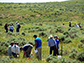 participants examine vegetation near Gillette