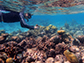 James Dimond snorkeling to collect coral in Belize