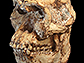 News thumbnail of a skull