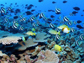 coral reef teeming with fishes