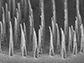an array of nanospears before being released for delivery of genetic information to cells