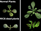 discovery in the model plant Arabidopsis of two new proteins