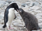 a penguin and a chick