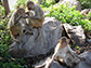 monkeys sitting on rocks