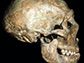 skull of a Neandertal known as Shanidar 1