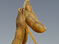 image of a soybean